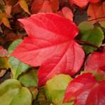 autunno schede didattiche