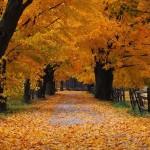schede didattiche scuola primaria autunno