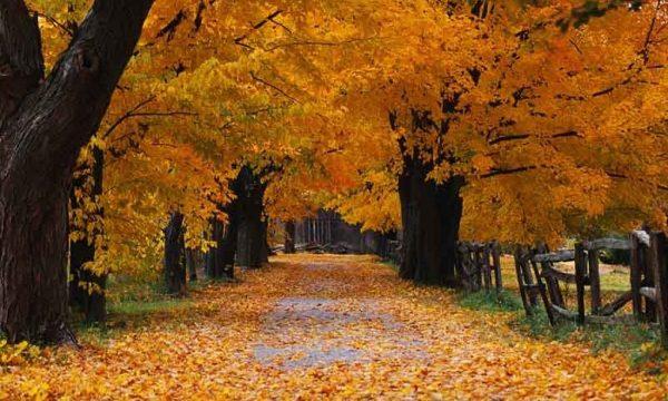Schede didattiche per le classi 3^ e 4^ Testi descrittivi sull'autunno