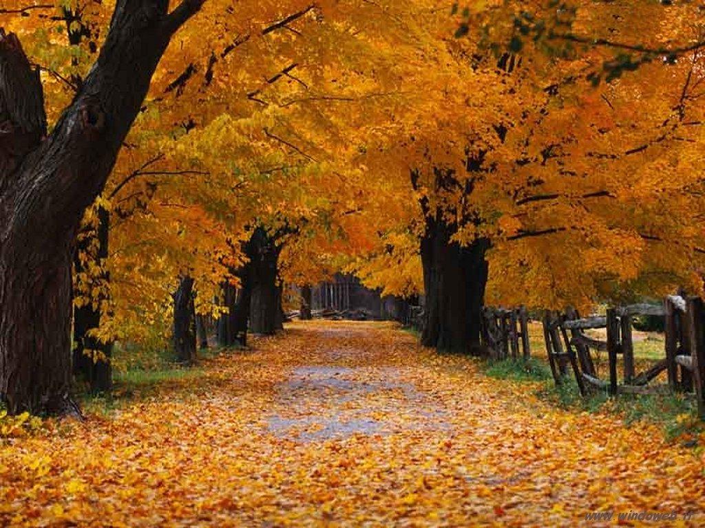 Un parco le foglie dai mille colori autunnali, marrone di tutte le tonalità fino al giallo, un sentiero e una panchina, ricoperta di foglie